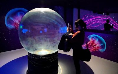 THE WORLD OF JELLYFISH – A NEW EXCLUSIVE PRAGUE ATTRACTION!